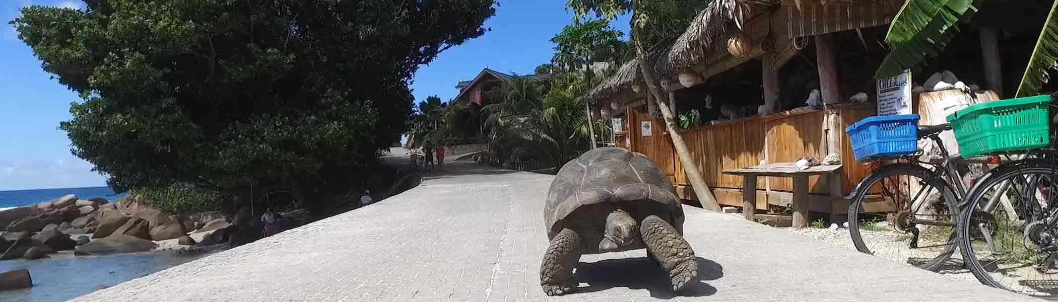 chez-jules, Bars and restaurants in Seychelles Islands