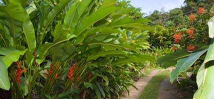 Kot Man-Ya Exotic Garden
