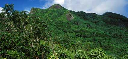 Morne Seychellois Nat'l Park